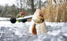 Прикормка для плотвы, рецепты для ловли летом, весной, осенью и зимой