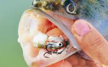 Как поймать судака на живца?