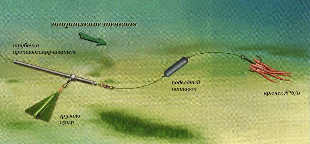 Ловля сома с берега на донку - снасти, приманки и техника ловли