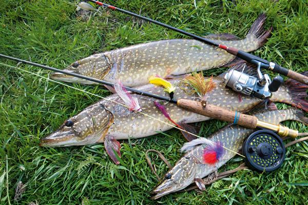 рыбалка можно ловить щуку