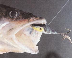 судак пойман на мормышку