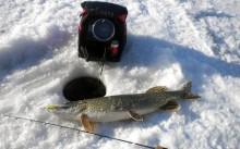 Эхолот на льду и пойманная рыба