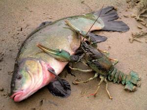 Рак и большая рыба