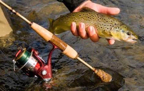 Форель в руках рыбака