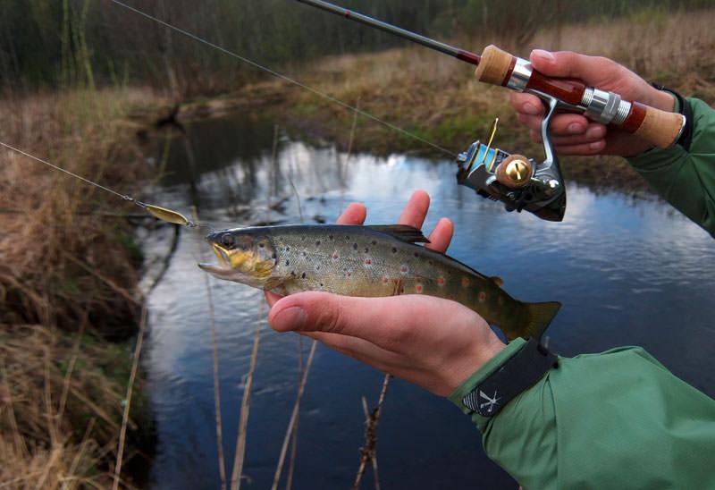 рыбалка форели в подмосковье осенью
