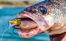 Рыба с приманкой