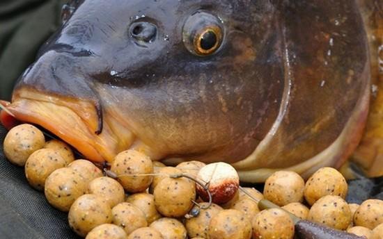 Ловля сазана на бойлы видео — Здесь рыба