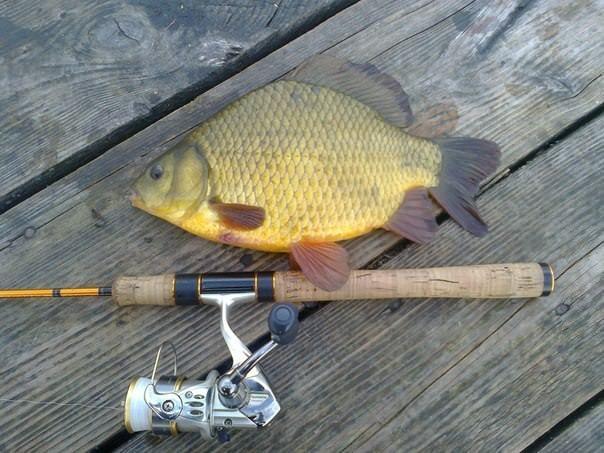 Ловля карася на фидер ~ Рыболовные секреты