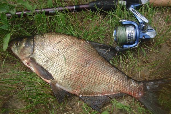 Как делается закидушка для рыбалки своими руками и из чего состоит снасть