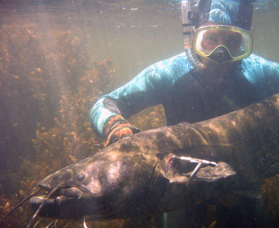 сом под водой