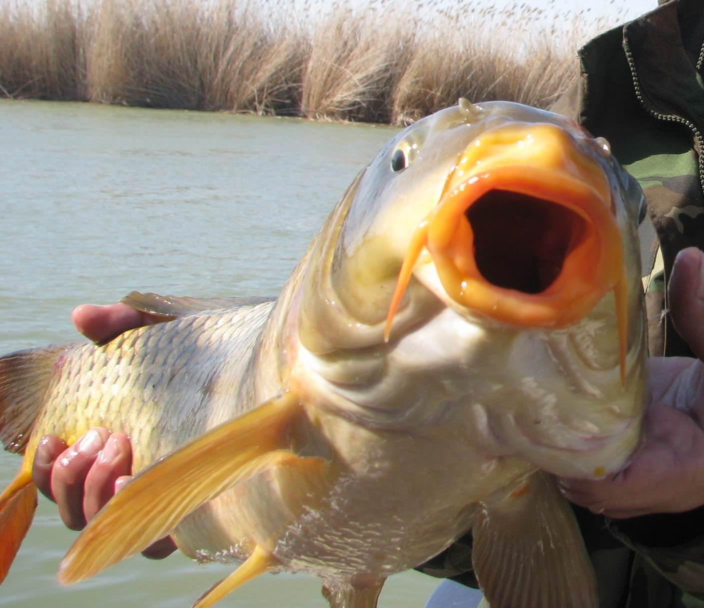 Снасти для ловли сазана с берега: какие лучше использовать?