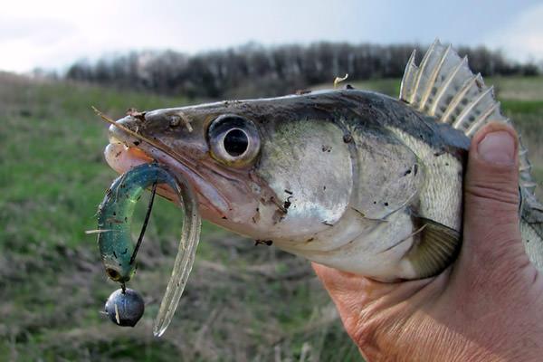 Блесна на Судака 10 лучших Какими блеснами лучше всего ловить судака зимой