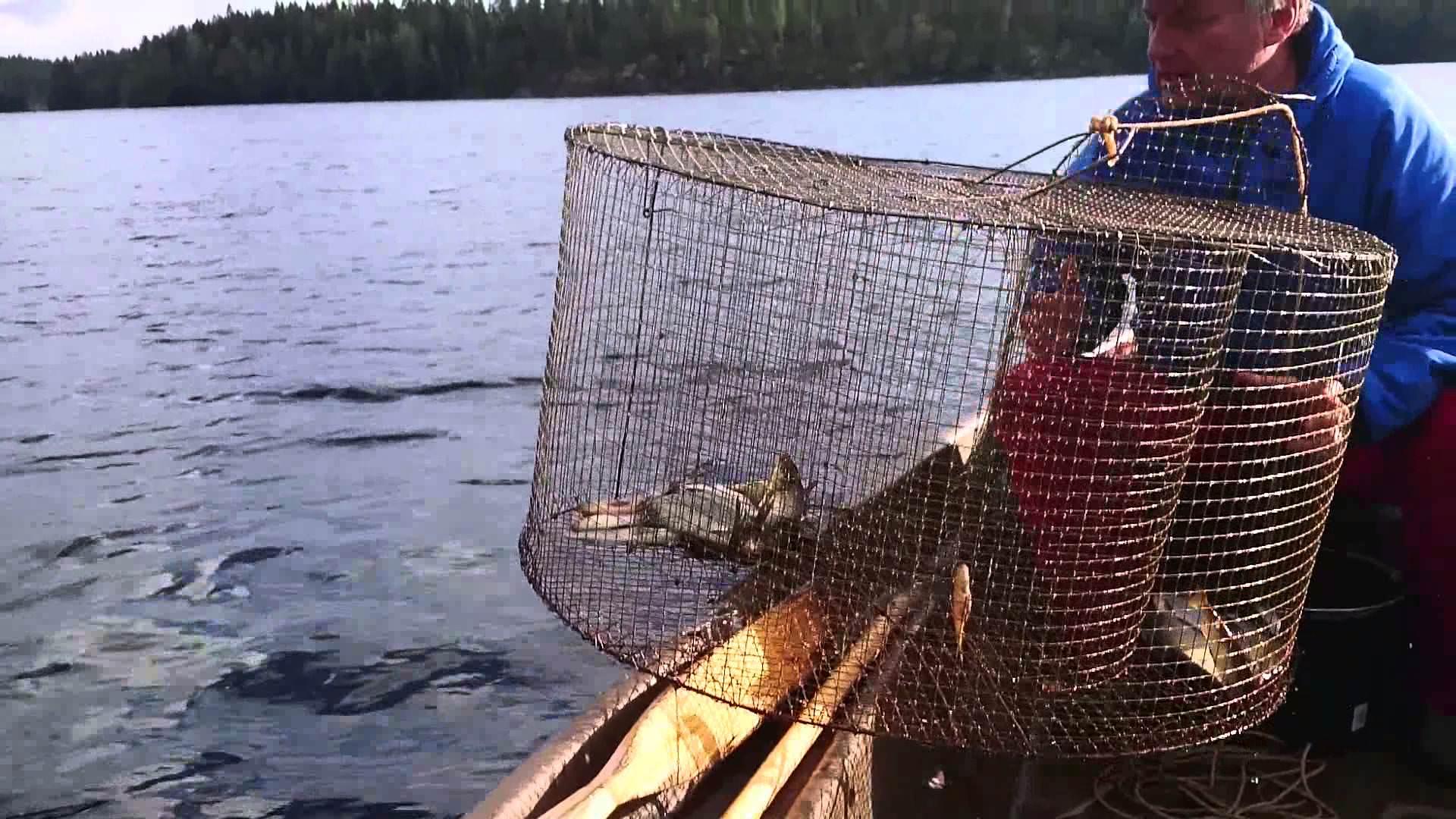 Рыбная ловля руками видео