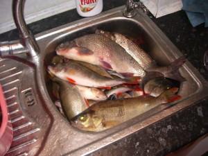 Много рыбы в раковине