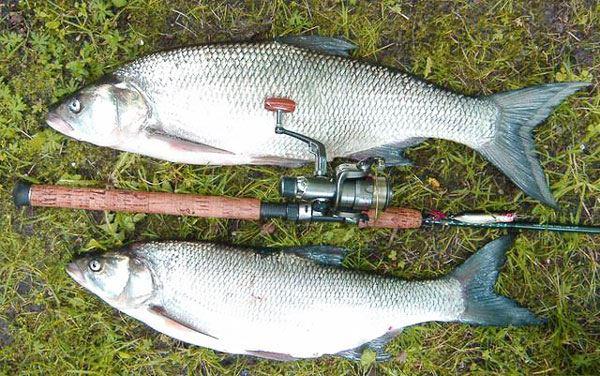 Спиннинг для жереха - Про рыбалку