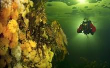 Как выбрать камеру для подводной съёмки