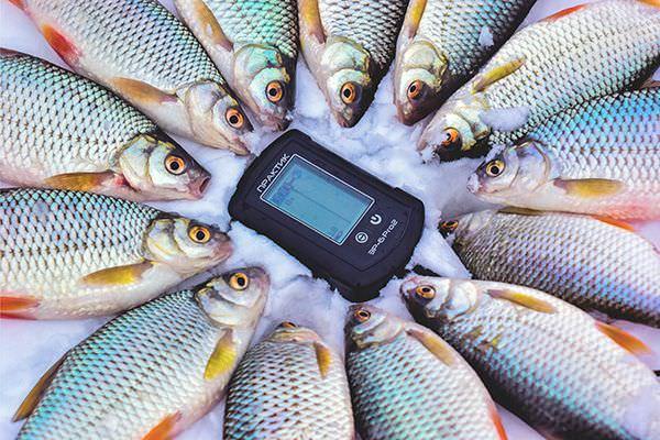 Эхолот и рыба вокруг него